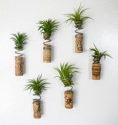 Tillandsia Splagnets Air Plant Recycled Spring by Eclectikinetic House Plants Decor, Plant Decor, Hanging Plants, Indoor Plants, Perennial Flowering Plants, Plant Crafts, Air Plant Display, Mother Plant, Plant Holders
