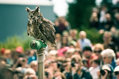 Great Horned Owl at Grouse Mountain - part of the Birds in Motion show.