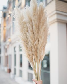 "Dried Pampas Grass Styled in ""TUSCAN DESERT"" by Pampas Gal Don't miss out! It's now your last chance to grab our Tuscan Desert Petite Pampas, it's one of the few dried Pampas Grass we have left in stock!⁠ #pampasgrass #beigepampas Seasons Of The Year, Pampas Grass, Wedding Trends, Photo Props, Deserts, Inspire, Create, Room, Inspiration"