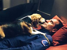The Top Ten Dogs From Science Fiction: Possibly the cutest dog in all of science fiction, Captain Jonathan Archer's Beagle is chronologically, the first space pet in all of Star Trek.
