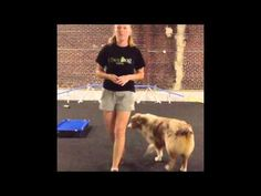 How to teach your dog to do a handstand - YouTube