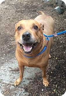 Big Boy Bailey is up for adoption at the Humane Society of New York.