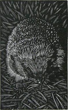 Andy English ~ Hedgehog, 2013 (wood engraving)