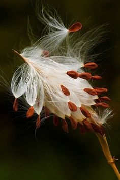 40 New ideas for macro nature photography flowers seed pods Nature Photography Flowers, Macro Photography, Flowers Nature, Exotic Flowers, Beautiful Flowers, Photographie Macro Nature, Weed Seeds, Foto Art, Seed Pods