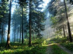 Foresta d'alberi nella luce del giorno