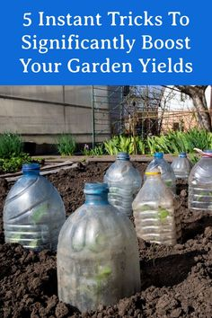 Vegetable Garden Tips, Veg Garden, Lawn And Garden, Garden Plants, Fruit Garden, House Plants, Garden Yard Ideas, Garden Projects, Container Gardening
