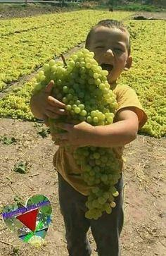 PsBattle: Boy holding hug full of grapes Fruit And Veg, Fruits And Vegetables, Fresh Fruit, Fruit Garden, Vegetable Garden, Beautiful Fruits, Exotic Fruit, Delicious Fruit, Fruit Trees
