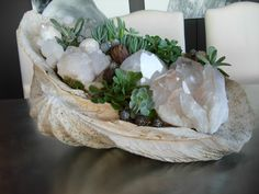 quartz or shells can be displayed inside a larger shell with suclents
