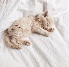 kitten naps