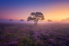 """enchanting-landscapes: """"  Mystery Morning by Albert Dros """""""