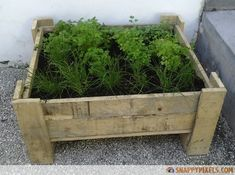 A box built from a pallet for an herb garden. You'll see at least one in my yard this summer!  Source - DIY Cozy Home:  107 Brilliant Wood Pallet Projects.