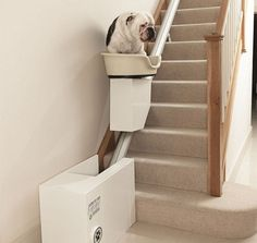 Spoil your dog with the ultimate in canine laziness technology - the doggy stairlift. This revolutionary piece of technology will keep your dog's energy saved...