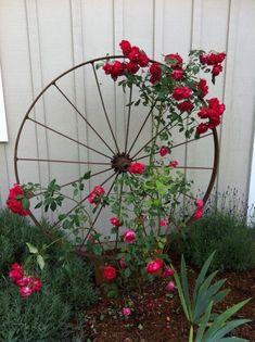 Wagon Wheel as Trellis / Garden Art Wagon Wheel als Spalier- / Gartenkunst von OSU Master Gardener, Diy Trellis, Trellis Design, Garden Trellis, Trellis Ideas, Rose Trellis, Clematis Trellis, Garden Planters, Climbing Plants For Trellis, Porch Trellis