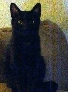"From Niko Campbell... ""This is Little, he's very curious and mischief. He's the baby of our 3 black cats.""  For the month of October, Cat Faeries is celebrating black cats. We will post pictures of our customer's cuties and donate 1% of our October sales to several black cat rescue groups. You can find out more at www.catfaeries.com/blog/celebrating-black-cats-in-october/"