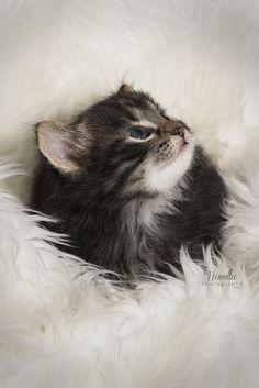 A Kitten Looking so Sweet!
