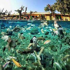 Underwater Sea, Travel News, Statue Of Liberty, Painting, Java, Liberty Statue, Painting Art, Paintings