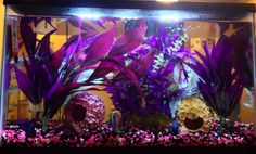 "10 gallon tank. Not all tanks have to have a ""natural"" theme. Silk plants, Petco flower balls. Good betta tank. Your betta will display beautiful swimming, flaring and exploring behavior in these larger tanks that you may not see when they are kept in smaller habitats."