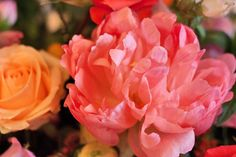 Beautiful pink, orange & apricot flower arrangement by Hayford & Rhodes