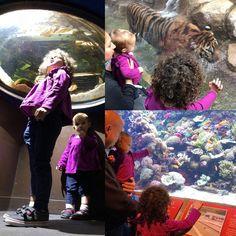 Their first visit to the Aquarium