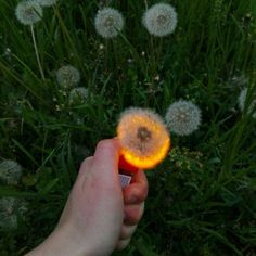 You at me when I shoved that dandelion in your mouth Aesthetic Grunge, Aesthetic Photo, Aesthetic Pictures, Aesthetic Girl, Arte Dope, Foto Instagram, Jolie Photo, Wall Collage, Aesthetic Wallpapers