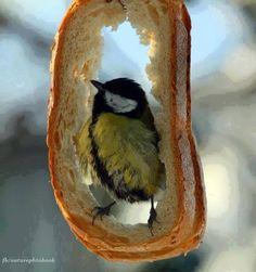 웃❤유... Bird sandwich?