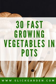 30 Fast Growing Vegetables In Pots - Container Gardening. Growing vegetables and herbs in pots are very easy and enjoyable. But there are some vegetables that we can grow very fast in pots and contain