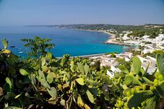 Castro Marina, Puglia (Apulia), Italy In recent. Pleasant View, Southern Italy, Visit Italy, Most Visited, Storytelling, Dreams, Landscape, Board, Travel