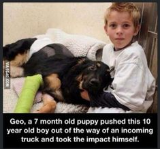 Wish dogs would stop risking their lives just to save ours. #dogsfunnypoop
