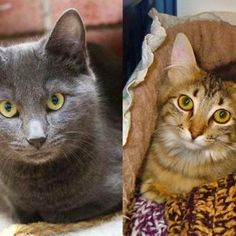 Smokey and AnneMarie were adopted - together!