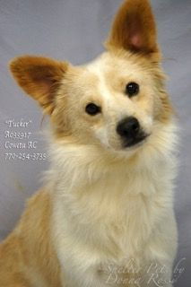 Dogs for adoption,euthanization,rescue,sponsor