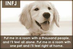 INFJ - put me in a room with a pet and I'll feel right at home