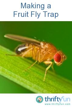 how to get rid of green bottle flies