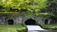 Rustic Bridge at Fountains Abbey springtime