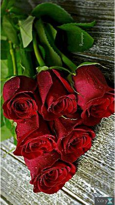 Good Morning Beautiful Flowers, Good Morning Roses, Beautiful Bouquet Of Flowers, Beautiful Flowers Wallpapers, Beautiful Rose Flowers, Pretty Flowers, Rose Flower Wallpaper, Flowers Gif, Foto Rose