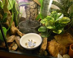 Cricket bowl [I recommend feeding crickets and roaches in ceramic glazed bowls for all critters that eat them! That keeps them from running loose in the tank and makes sure you can tell the animal ate them. Eastern Bearded Dragon, Bearded Dragon Diet, Tree Frog Terrarium, Lizard Tank, Frog Habitat, Whites Tree Frog, Pet Frogs, Red Eyed Tree Frog, Pet Turtle