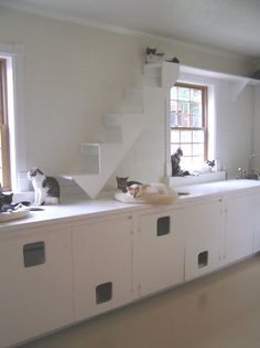 "Cat stairs??? Make a ""Top Shelf"" in laundry area for kitty with stairs leading up to it?... Does become a lot of work Cat Shelves, Cat Run, Cat Walk, Catio, Cat Habitat, Cat Stairs, Cat Climbing, Laundry Area, Laundry Room"
