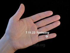 Yanhuang (T 11.23) | eLotus CORE
