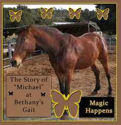 (Conclusion) So the story goes on like this:   Together Michael and Dash healed in ways they could never have done alone.  Michael has since moved on from the program and Dash passed after three good years with us.  However, the legacy of love shared by a little boy and a big horse will live on forever with all of us at Bethany's Gait.  We hope you enjoyed reading this :) You can always donate to our cause at our website http://www.bethanysgait.org/   May your day be blessed!