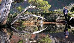 Tasmania's pristine Southwest National Park is an eco-tourism success story. Image by Tourism Tasmania Eco Beauty, Clean Beauty, Cool Countries, Countries Of The World, Tasmania, Success Story, Natural Cosmetics, Beautiful Places To Visit, Natural Health