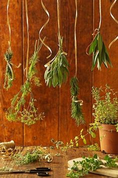 Want to enjoy summer herbs all year long? We'll show you how with these tips and tricks on drying herbs.