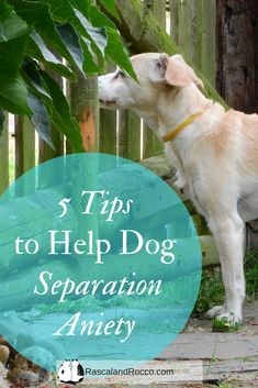 Cat Training Tips 5 tips to help with dog separation anxiety Dog Separation Anxiety, Dog Anxiety, Anxiety Tips, Anxiety Facts, Health Anxiety, Anxiety Help, Anxiety Relief, Stress Relief, Dog Training Classes