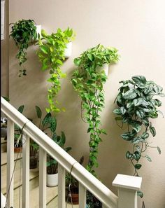 Indoor Gardens For Your Home Room With Plants, House Plants Decor, House Plants Hanging, Plant Rooms, Hanging Plants Outdoor, Easy House Plants, Hanging Plant Wall, Hanging Planters, Indoor Plant Wall