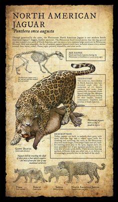 Natural History Museum Signage | Part II on RISD Portfolios