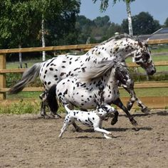 Seeing too many spots racing right before my very eyes! - Horses Funny - Funny Horse Meme - - Seeing too many spots racing right before my very eyes! The post Seeing too many spots racing right before my very eyes! appeared first on Gag Dad. Funny Horses, Cute Horses, Pretty Horses, Most Beautiful Horses, Animals Beautiful, Horse Meme, Funny Dogs, Baby Animals Pictures, Cute Animal Pictures