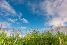 Myland meadow, Colchester, with high cirrocumulus. Saw Series, Environmental Art, Image Collection, Photo Book, My Photos, Clouds, Fine Art, Plants, Photography
