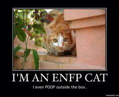 ENFP cat