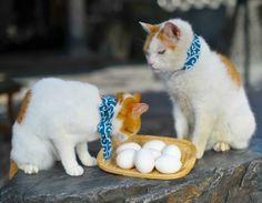 ししょー! 温泉から卵が!