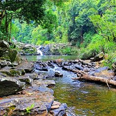 Where is it: Obi Sth Lane, Maleny, Sunshine Coast Hinterland   Why we love it: A creek, waterfalls and swimming hole in the beautiful location of Maleny - whats not to love?   Tell me more: Gardner's Falls are a nice set of small cascading waterfalls and wa