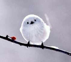 Tiny bird,she looks like snow.
