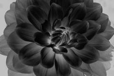 Tulpen In Zwart-wit - Downloaden van meer dan 48 Miljoen hoge kwaliteit stock foto's, Beelden, Vectoren. Schrijf vandaag GRATIS in. Afbeelding: 19381025